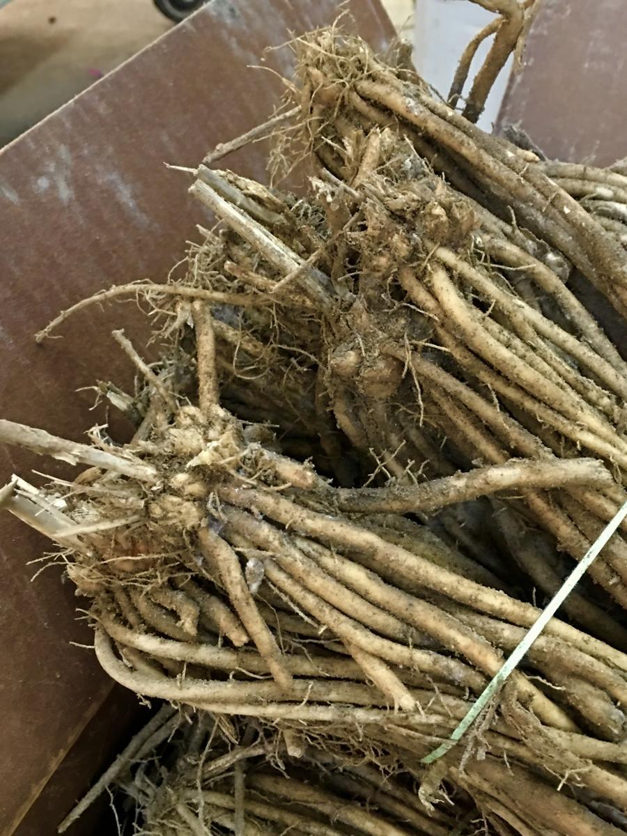 Where is New England's White Asparagus? WGBH | Craving Boston| WGBH | Craving Boston