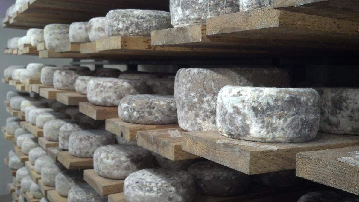 How the Experts Choose Their New England Cheeses for the Spring | WGBH | Craving Boston