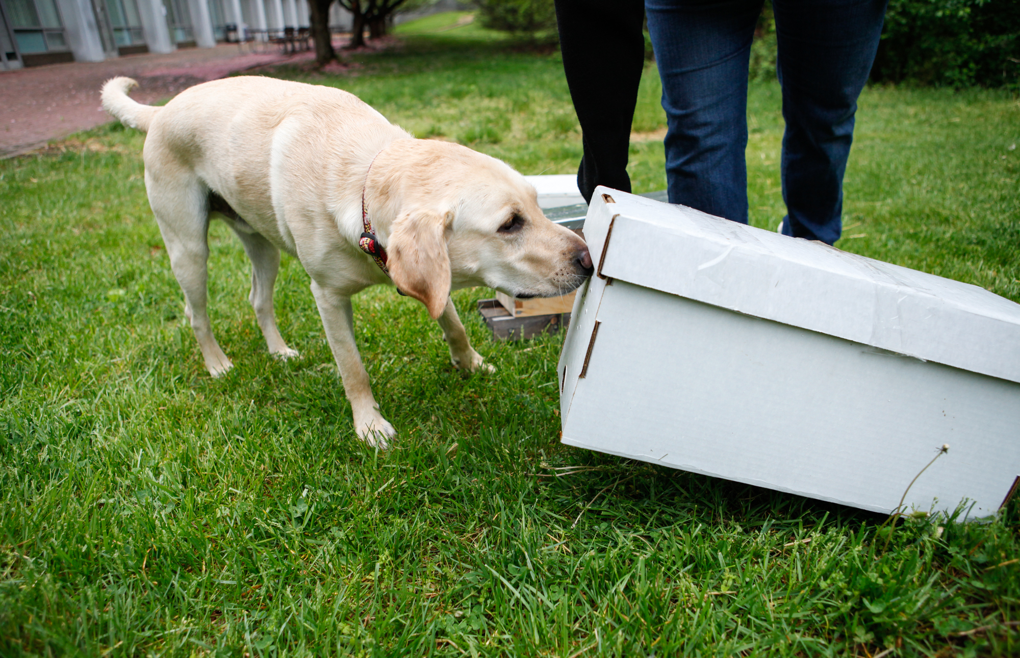 Keeping Bees Safe: It's a Ruff Job, But This Doggy Detective Gets it Done | WGBH | Craving Boston