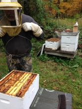 Notes From a Beekeeper's Daughter | WGBH | Craving Boston