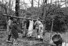 Students in 1969 look on as Hobe Beasley, John Hopper and Hopper's wife suspend a hog for finishing the work of scalding and scraping.