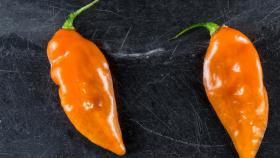"New York City's Blue Hill restaurant is the biggest buyer of ""Habanadas,"" a habanero bred to be heatless, so the focus is on its melon-like flavor. (Photo Courtesy: Blue Hill)"