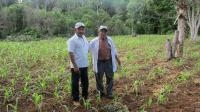 Farmers Gualberto Casanova (left) and Dionisio Yam Moo stand among young corn plants in Yam Moo's improved milpa plot. (Photo Credit: Gabriel Popkin)