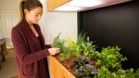 Somerville Start-Up Grows Lettuce in Your Living Room | WGBH | Craving Boston